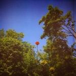 benoitpioulard-sonnet